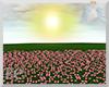 EC| Pink Rose Field