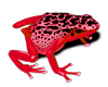 [AR] Red Frog