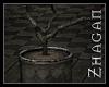 [Z] TS dead Plant