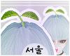서울 Kawaii Sprout.