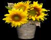 Flowers in a pot