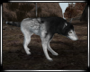 ☢ Res Evil Wolf