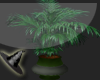 (TT) Grove Plant
