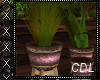 !C* O Potted Plants