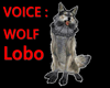 Grey WOLF Animated