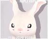 $K My pet bunny e