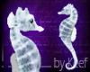 Seahorse, White