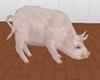 ¡ABL  A LITLE PIG