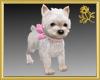 Pet Westie Puppy