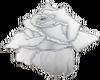 White Pearl Rose.2