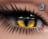 Feline Golden Eyes F