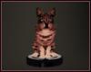 *N* Roomba Kitty