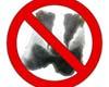 no badgers