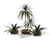 3er Plantset V 1
