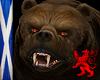 Brown Bear Pet