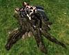 Tree Stump Couples Pose