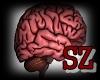 (SZ)Brain