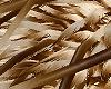 [AG] Porcupine Crown