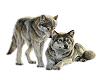 WILD WOLFS