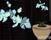 Exotic Garden Orchid
