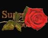romantic rose 1