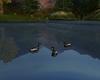 Mountain Cabin Ducks