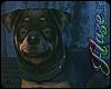 [IH]  Rottweiler
