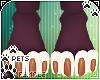 [Pets] Quin | paws