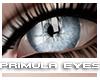 [V4NY] Primula Eyes 02