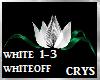 White Rose Light