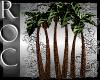 *Roc*Palm Trees
