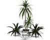 *RP* White Plant Set