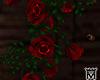 MayeHanging Roses