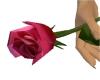 Single Love Rose + Music