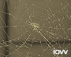"Iv""Cobwebs"