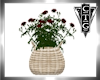 CTG RED ROSES BASKET
