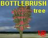 !@ Bottlebrush tree