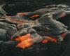 Animated Molten Lava!