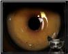 |LB|Lion Eyes unisex