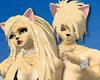Tabby Cat Fur F