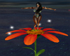 Dance on Flower anim.