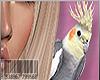 😜SHOULDER BIRDY F