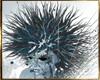 (A1)Hair ice woman