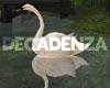 !D Crystal swans