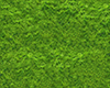 add groundcover grass