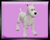 Dp Snowy Dog
