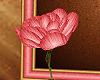 [AG] Cookie Rose