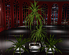 ~D~ O.R. Palm Plant Set