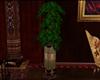 !E Muse Pillar Plant