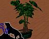 Greenbrite Plant